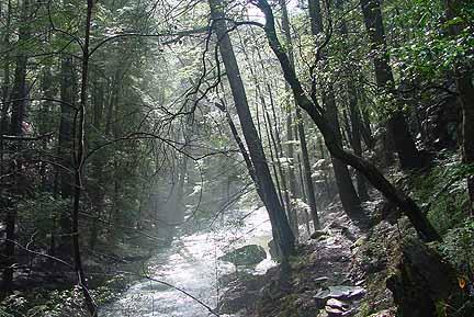 B Padgett Down the Creek (1)